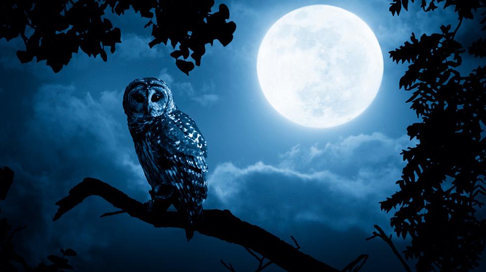 La notte insonne